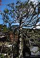 Autumn Foliage in Japan (4121261484).jpg
