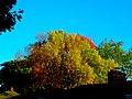 Autumn in Madison - panoramio (12).jpg