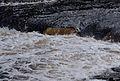 Aysgarth Falls MMB 42.jpg