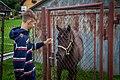 Břehy (Týn nad Vltavou), koně (2021).jpg