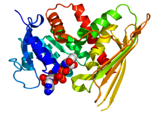 Biliverdin reductase