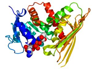 Biliverdin reductase - Image: BLVRA 2H63