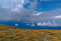 Babia Góra – piętro alpejskie z kępami sita skuciny.jpg