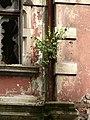 Bad Blankenburg - ehem. Hotel Chrysopras - Südost-Fassade - Fenster Detail.jpg