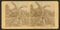 Banana plant, Florida, from Robert N. Dennis collection of stereoscopic views 2.png