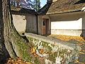 Baum Kapuziner Solothurn.jpg