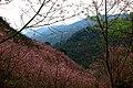 Bear Mountain (熊空附近林場) - panoramio (1).jpg