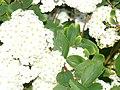 Bedazzling Flowers (enhanced).jpg