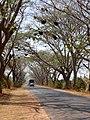 Beehives on road Karnataka 0676 02.jpg
