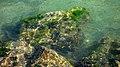 Below the surface of Brofjorden.jpg