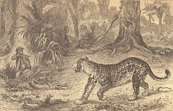 Belt Thomas jaguar frontispiece.jpg