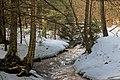 Bennett Branch Forest (1) (13208563413).jpg