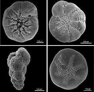 Δ18O - Foraminifera samples.