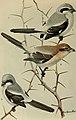 Bird lore (1918) (14775153513).jpg