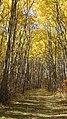 Birds Hill Provincial Park, Manitoba (481680) (9448037896).jpg