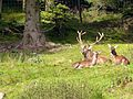 Black Forest- Red deer (10561868135).jpg