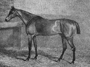 Blucher (horse) - Blucher in an engraving of 1816 after a painting by James Barenger