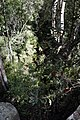 Blue Mountains Bush 07.JPG