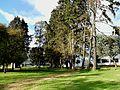 Bogotá pinar en la UNAL.JPG