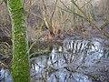 Borovský prales - panoramio.jpg