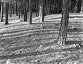 Bos bij Laren, Bestanddeelnr 252-0876.jpg