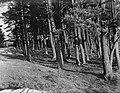 Bos op de Veluwe, Bestanddeelnr 252-0575.jpg