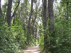 El sendero que atraviesa la península