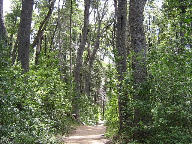 El sendero que atraviesa la península, y que termina en el bosque de arrayanes.
