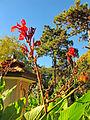 Botanička bašta Jevremovac, Beograd - jesenje boje, svetlost i senke 19.jpg