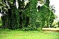 Botanic garden limbe39.jpg