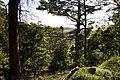Bowral NSW 2576, Australia - panoramio (114).jpg