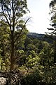 Bowral NSW 2576, Australia - panoramio (122).jpg
