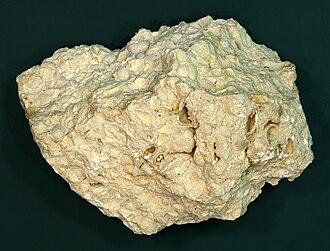 330px-Brachiopoda-limestone_hg.jpg
