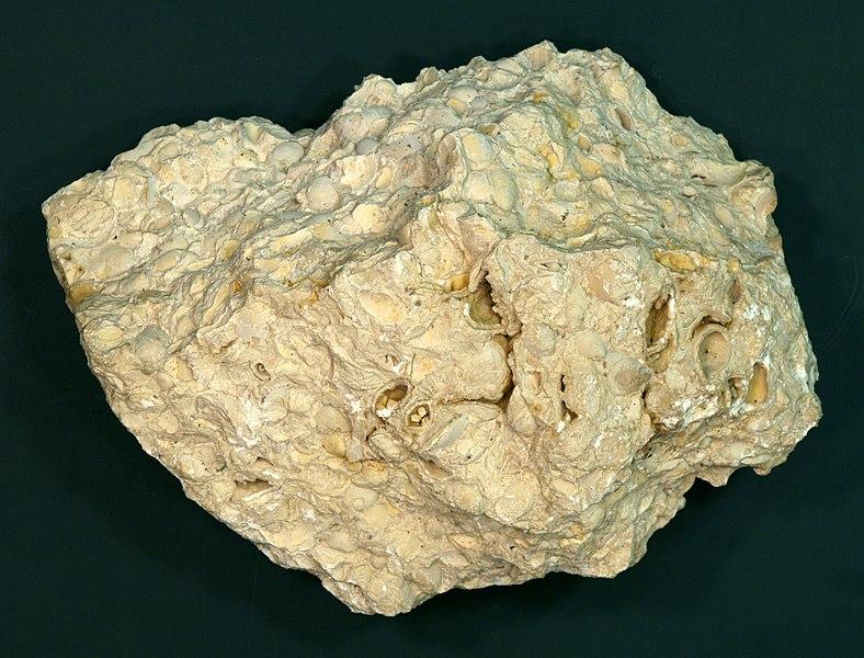 File:Brachiopoda-limestone hg.jpg