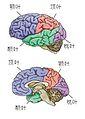Brain-3.jpg