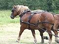 Breton horse at Comper.jpg