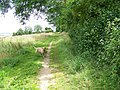 Bridleway, The Oaks - geograph.org.uk - 1438358.jpg