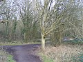 Bridleway Junction, Great Bookham Common - geograph.org.uk - 676575.jpg