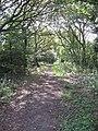 Bridleway near Strawberry Roundabout - geograph.org.uk - 1433538.jpg