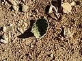 Broken cactus.jpg
