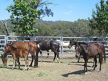 Four thin horses and a foal in a pen fenced with pipe panels, some eating hay