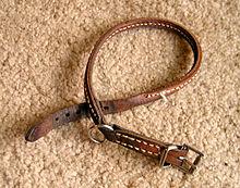 Shock Collar Dog Chasing Cat