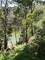Budj Bim ‐ Mt Eccles National Park, Victoria, Australia 36.jpg