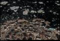 Buiobuione - Ilulissat - greenland - 2018 - 7.tif