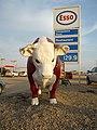 Bull in Radisson (2877634447).jpg