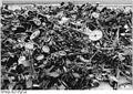 Bundesarchiv Bild 183-1990-0315-301, Schönebeck, Verschrottung von Flak-MGs.jpg