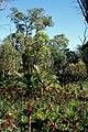 Bushland in Kings Park and Botanic Garden.jpg