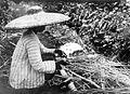 COLLECTIE TROPENMUSEUM De stengels van de roselle (Hibiscus sabdariffa) worden met de hand ontdaan van hun bast TMnr 10011390.jpg