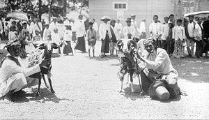 Garut - Goat fights in Garut (1921)
