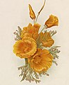 California Poppies or Eschscholzia californica in art, from- Oranges and Poppies (Boston Public Library) (cropped).jpg